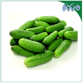 CUCUMBER-GREEN(GHERKINS)