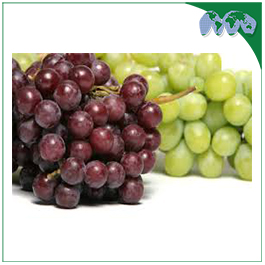 GRAPES - RED/GREEN